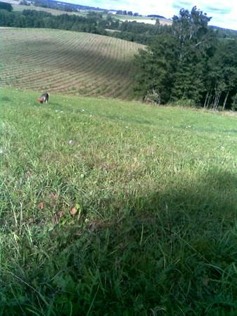 misko-sodinimas_2